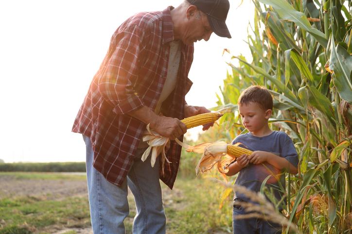 Kukorica: nagyra nőhet